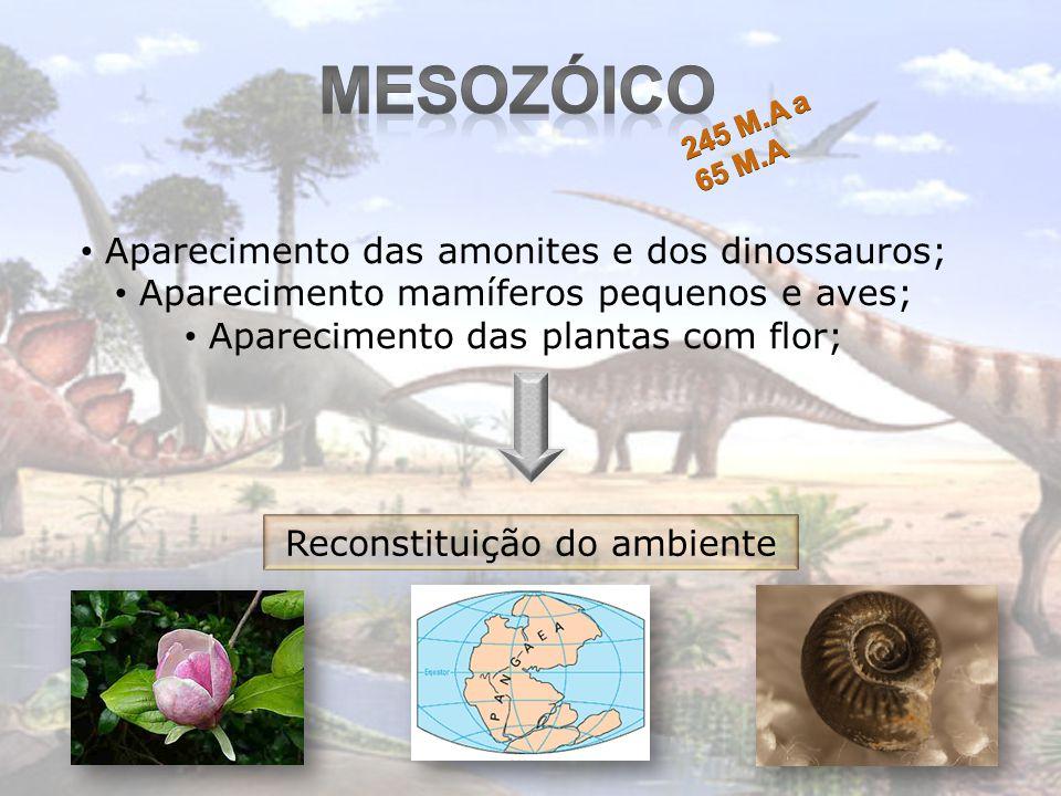Mesozóico Aparecimento das amonites e dos dinossauros;