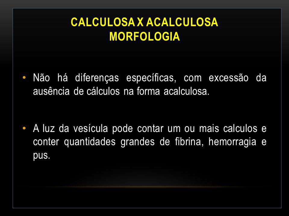 Calculosa x Acalculosa Morfologia