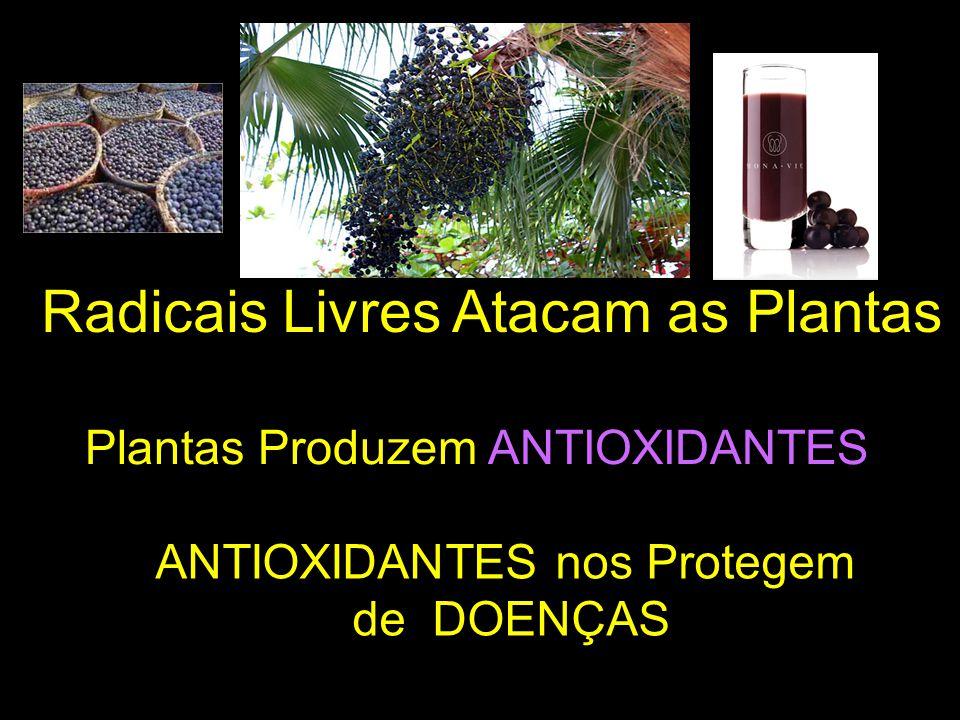 ANTIOXIDANTES nos Protegem
