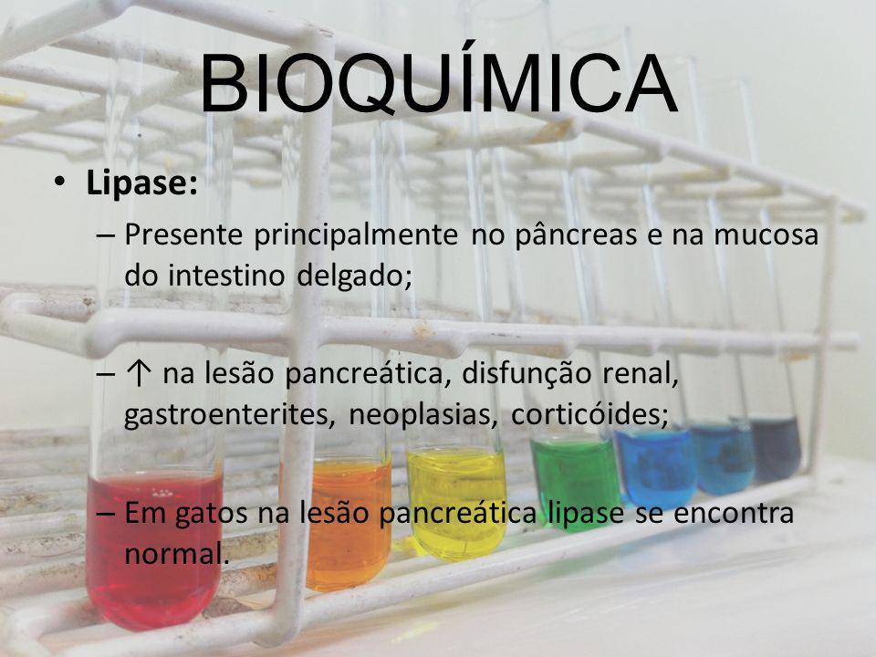 BIOQUÍMICA Lipase: Presente principalmente no pâncreas e na mucosa do intestino delgado;