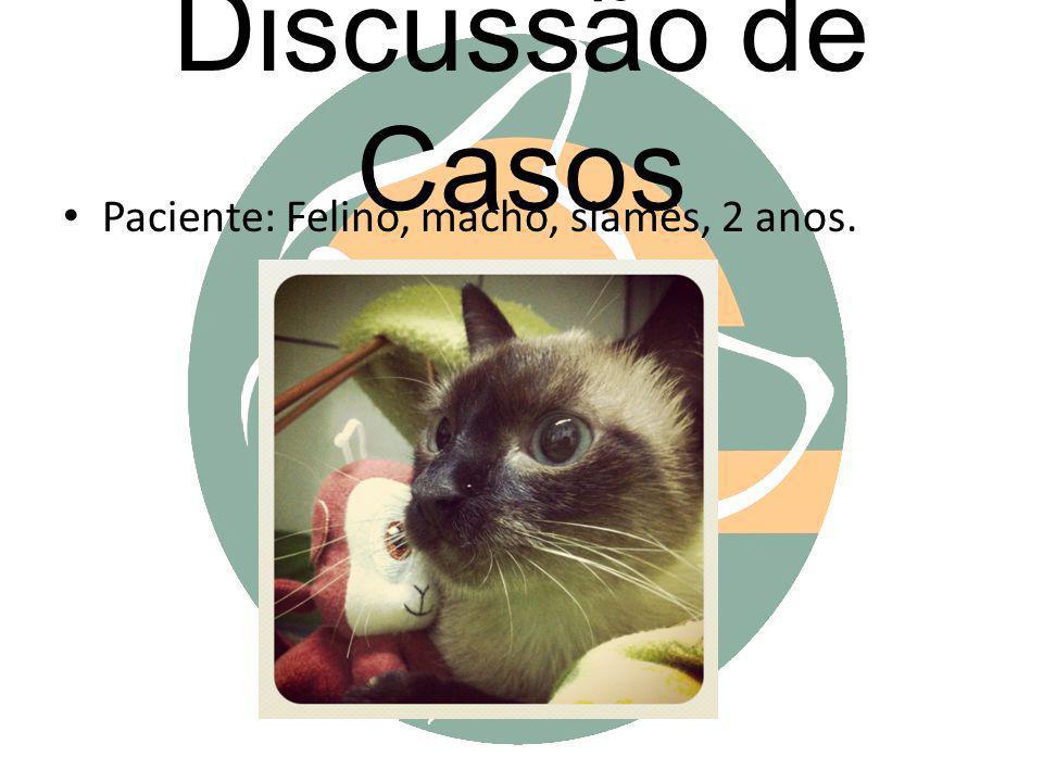 Discussão de Casos Paciente: Felino, macho, siamês, 2 anos.