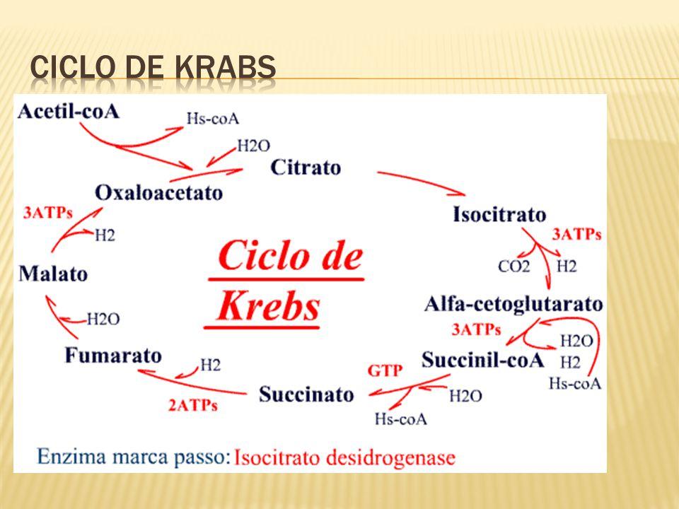 Ciclo de Krabs