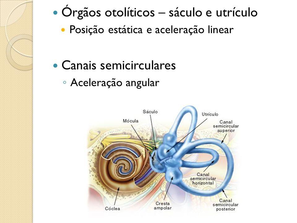 Órgãos otolíticos – sáculo e utrículo