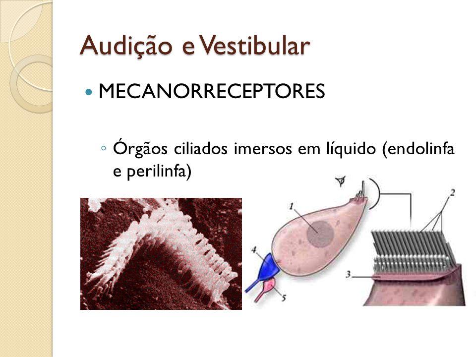 Audição e Vestibular MECANORRECEPTORES