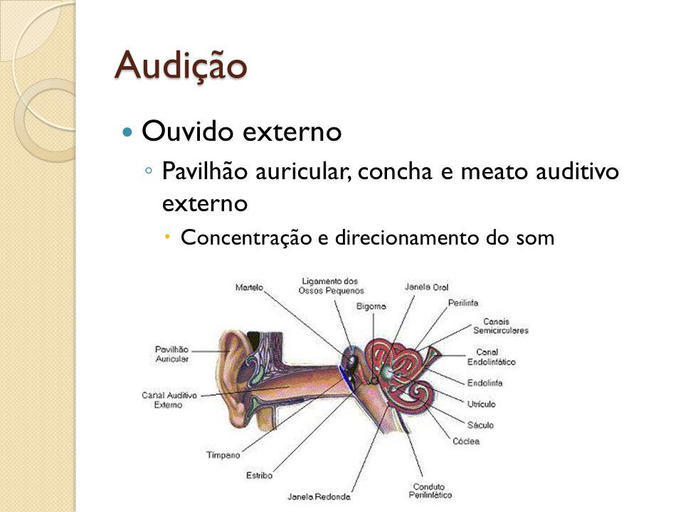 Audição Ouvido externo