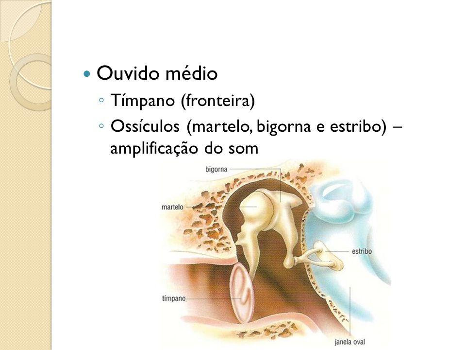 Ouvido médio Tímpano (fronteira)