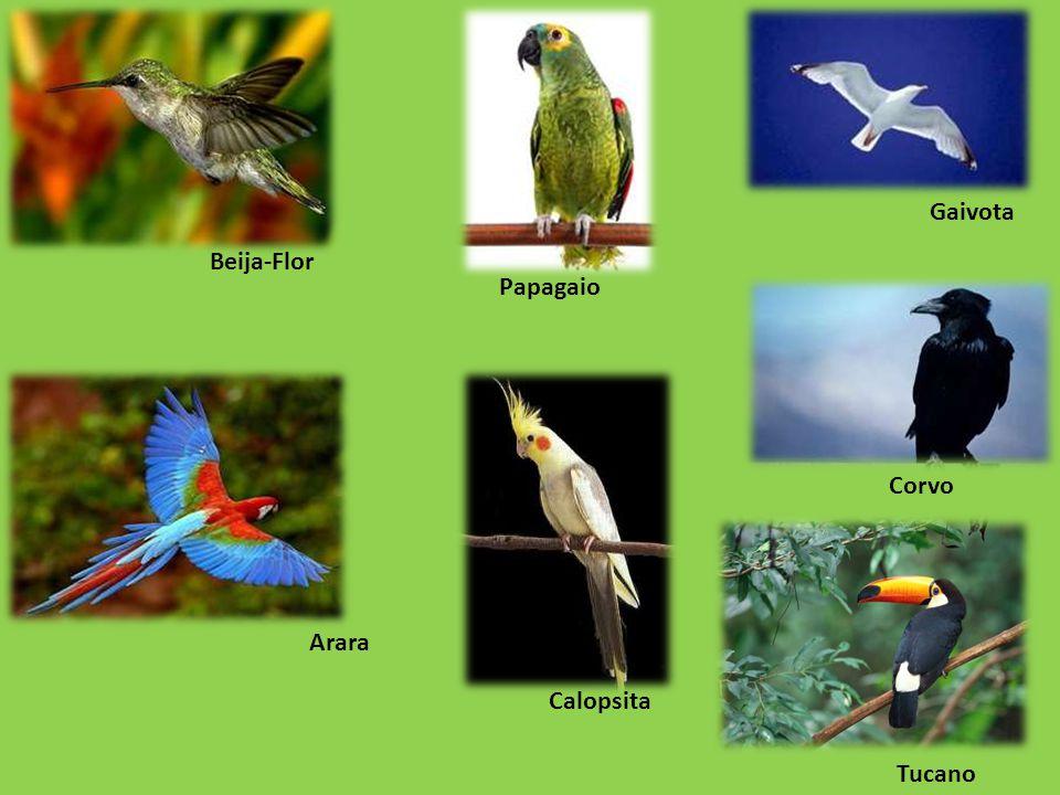 Gaivota Beija-Flor Papagaio Corvo Arara Calopsita Tucano