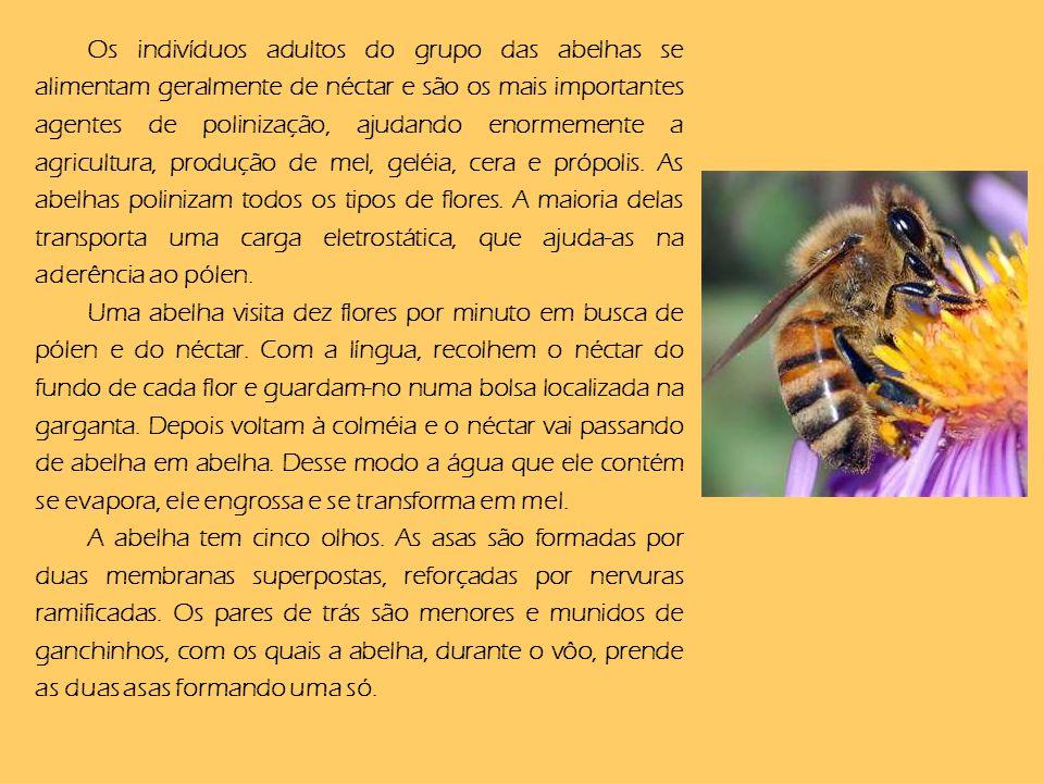 Os indivíduos adultos do grupo das abelhas se alimentam geralmente de néctar e são os mais importantes agentes de polinização, ajudando enormemente a agricultura, produção de mel, geléia, cera e própolis. As abelhas polinizam todos os tipos de flores. A maioria delas transporta uma carga eletrostática, que ajuda-as na aderência ao pólen.