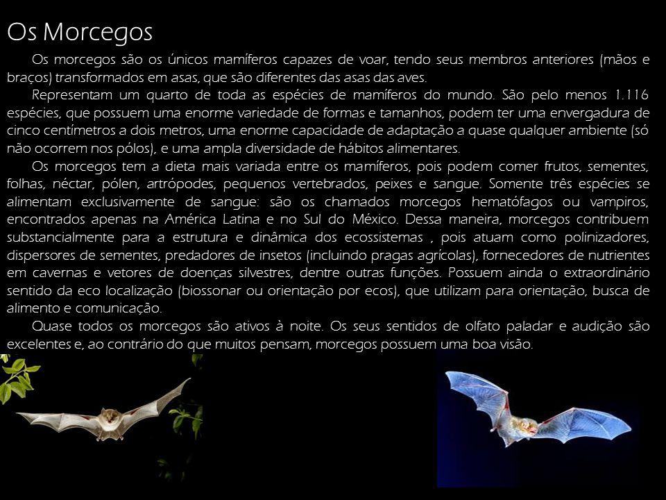 Os Morcegos: