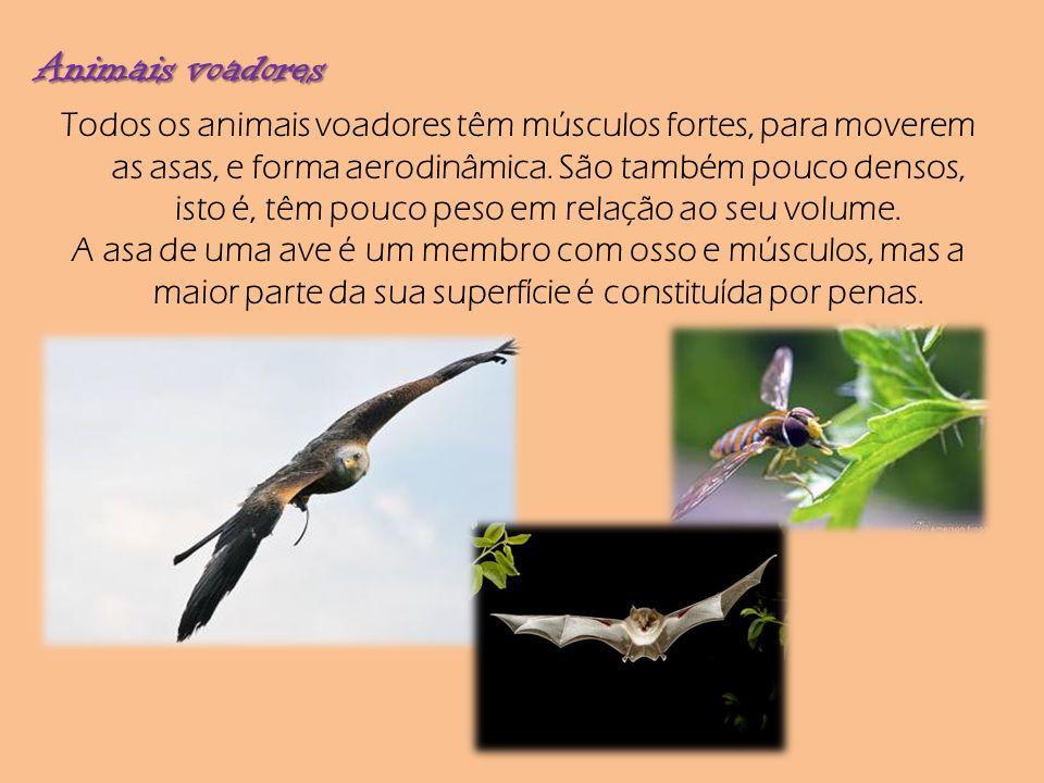 Animais voadores