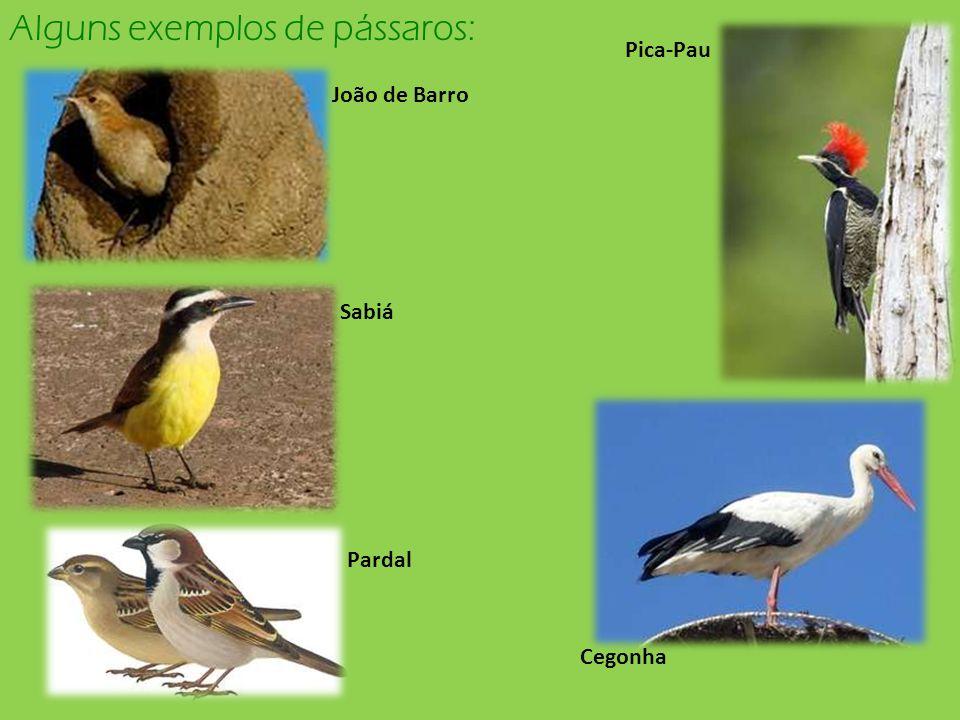 Alguns exemplos de pássaros: