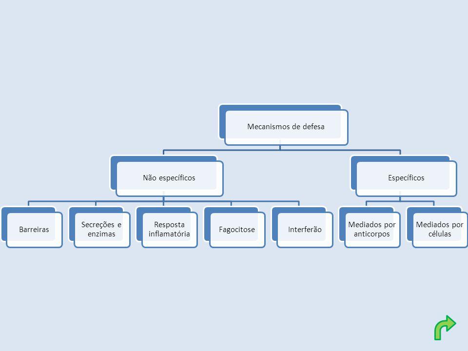 Resposta inflamatória Fagocitose Interferão Específicos
