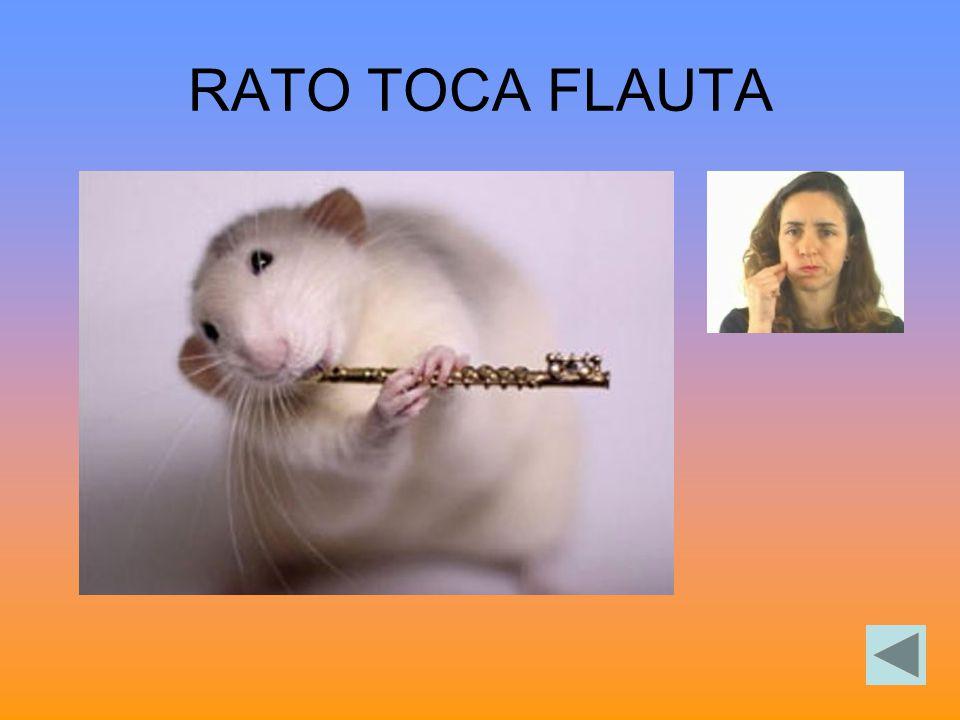 RATO TOCA FLAUTA
