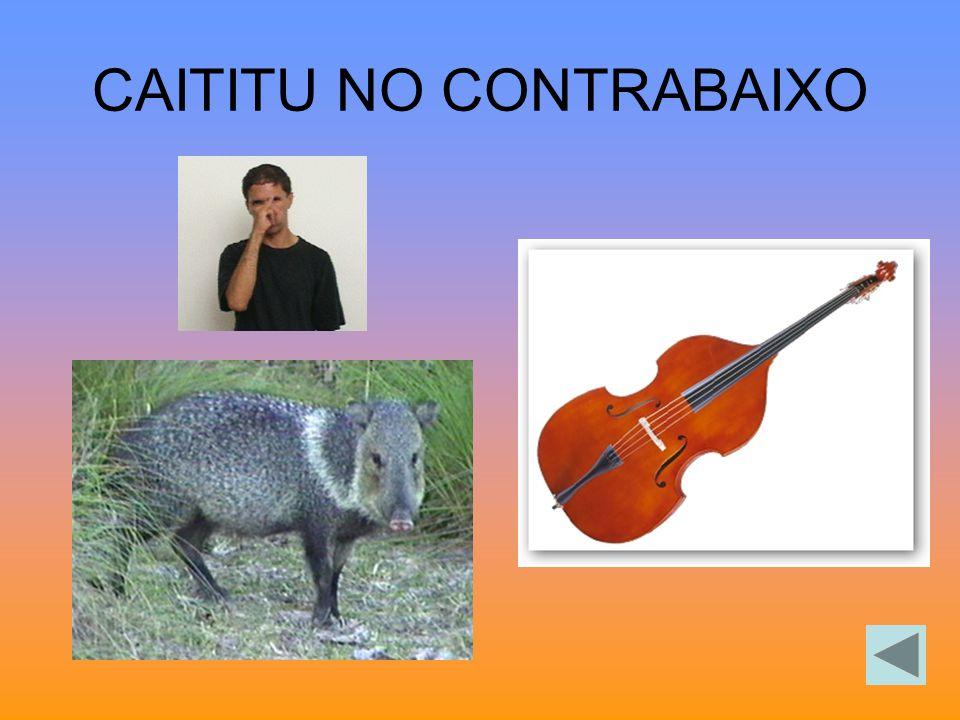 CAITITU NO CONTRABAIXO