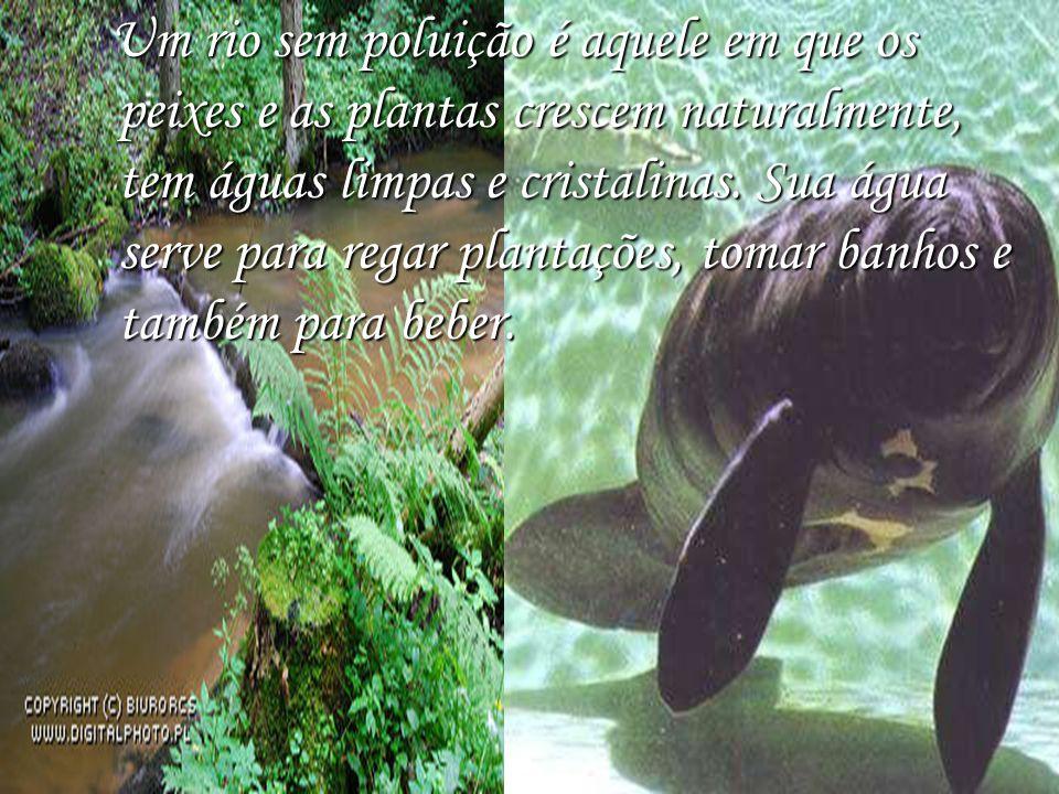 Um rio sem poluição é aquele em que os peixes e as plantas crescem naturalmente, tem águas limpas e cristalinas.