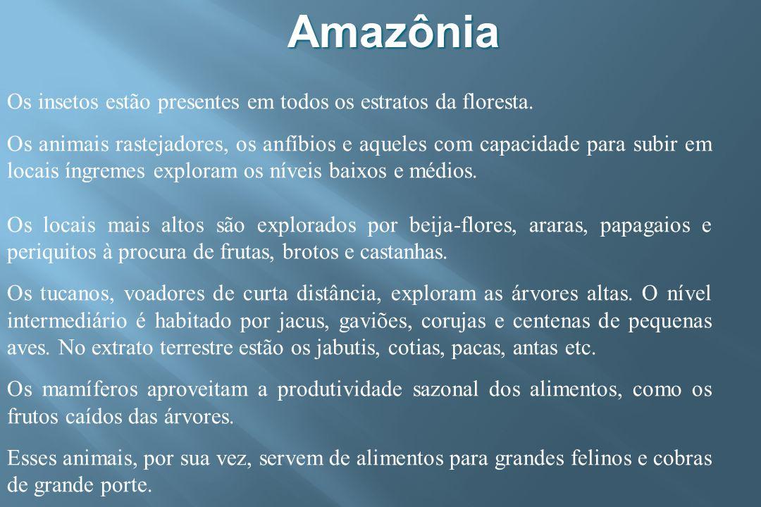 Amazônia Os insetos estão presentes em todos os estratos da floresta.