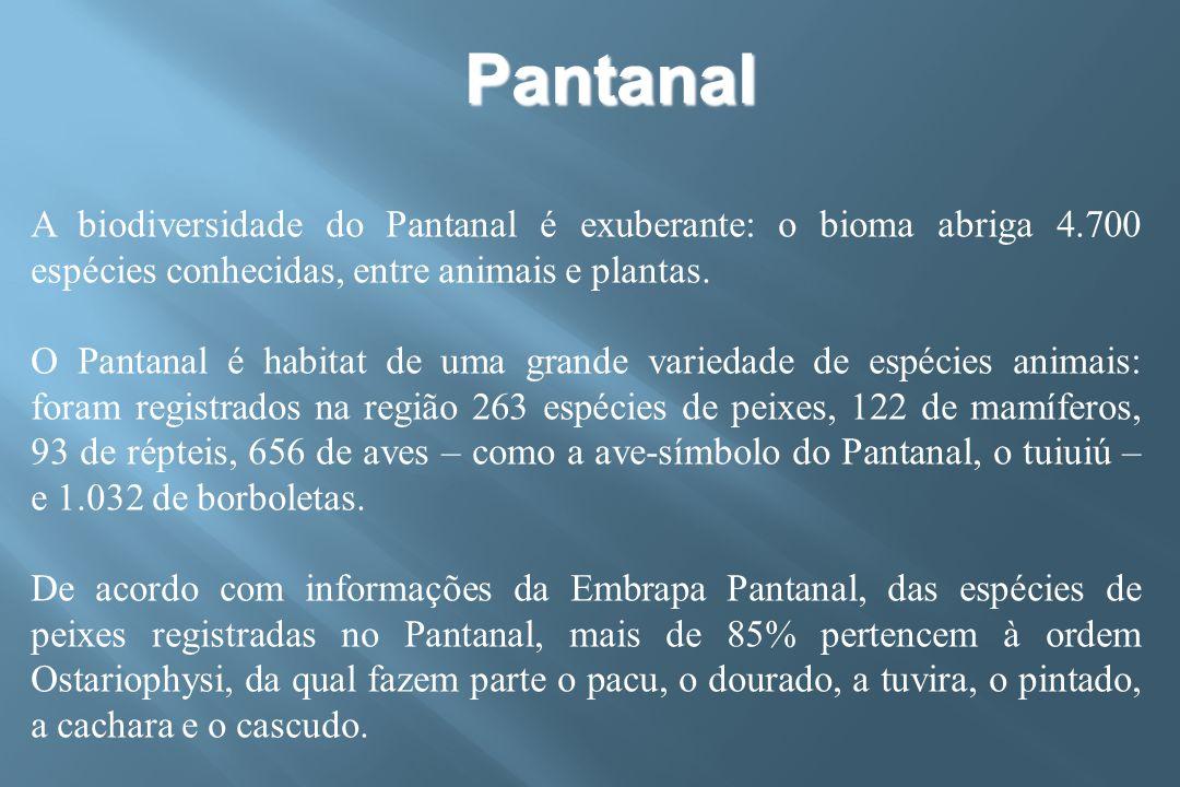 Pantanal A biodiversidade do Pantanal é exuberante: o bioma abriga 4.700 espécies conhecidas, entre animais e plantas.