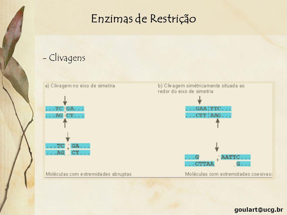 Enzimas de Restrição - Clivagens goulart@ucg.br