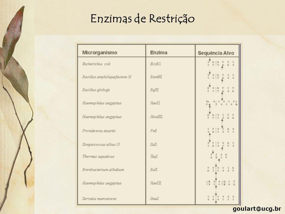Enzimas de Restrição goulart@ucg.br
