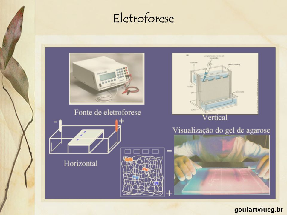 Eletroforese goulart@ucg.br
