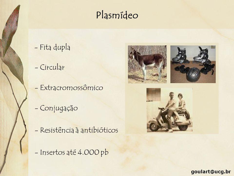 Plasmídeo - Fita dupla - Circular - Extracromossômico - Conjugação