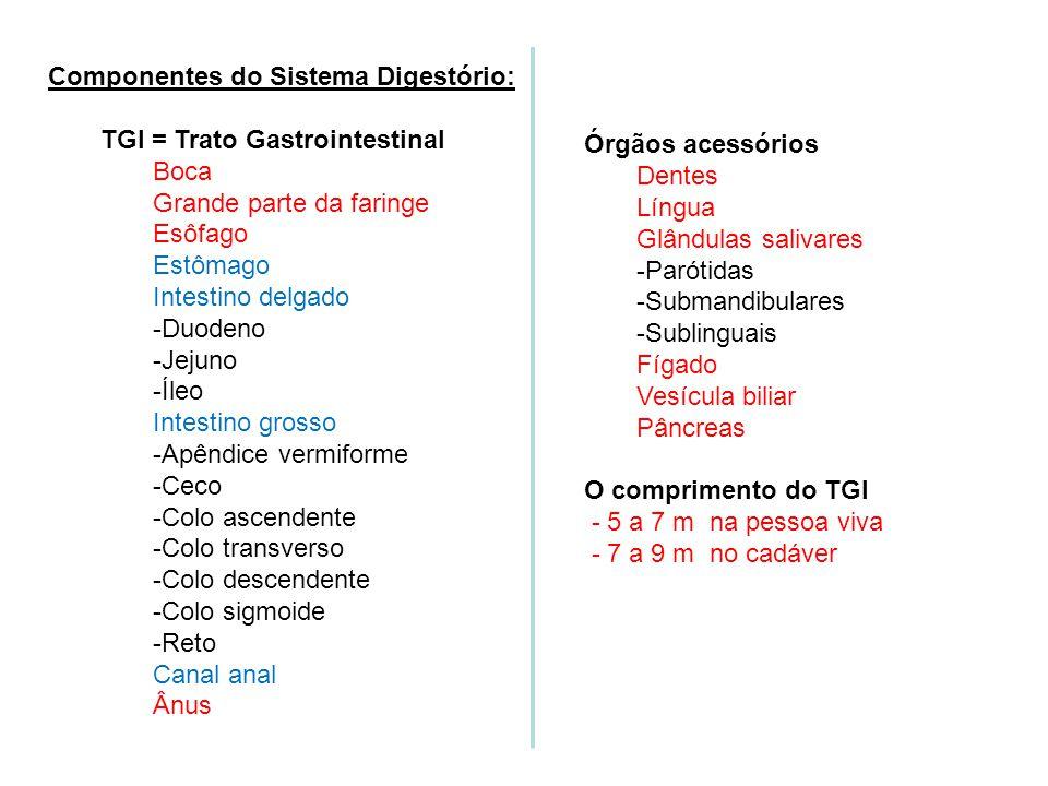 Componentes do Sistema Digestório:
