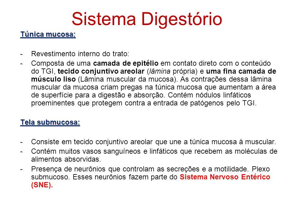 Sistema Digestório Túnica mucosa: Revestimento interno do trato: