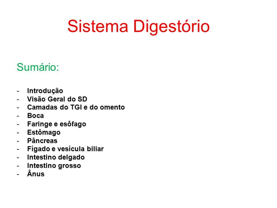 Sistema Digestório Sumário: Introdução Visão Geral do SD