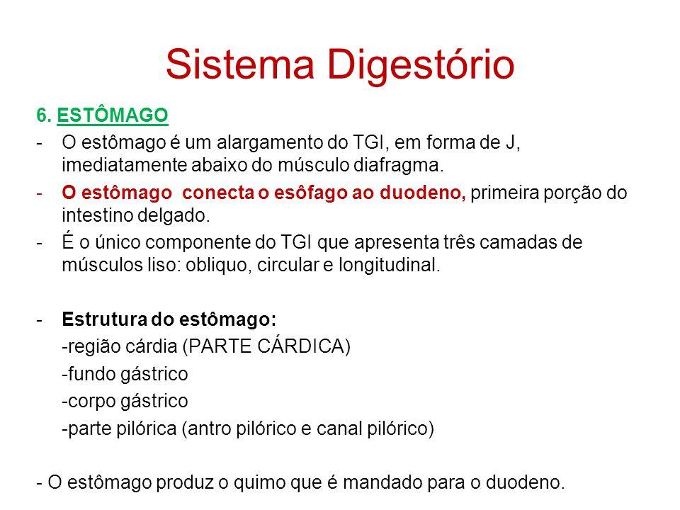 Sistema Digestório 6. ESTÔMAGO