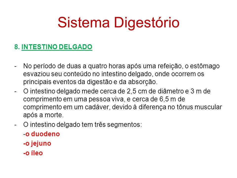 Sistema Digestório 8. INTESTINO DELGADO