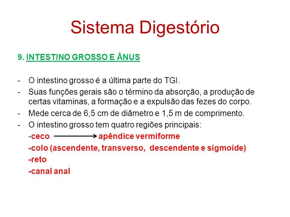 Sistema Digestório 9. INTESTINO GROSSO E ÂNUS