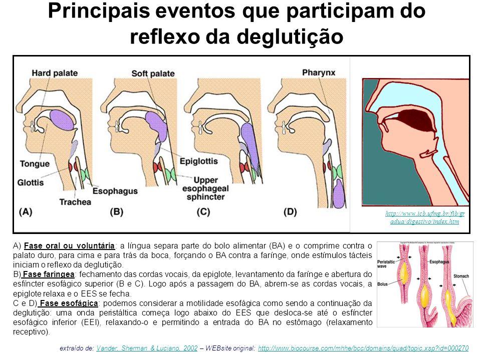 Principais eventos que participam do reflexo da deglutição