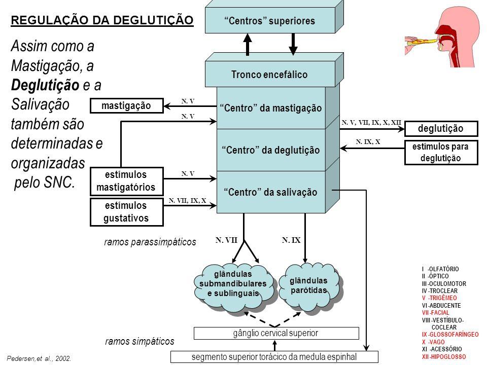Centro da salivação Centro da deglutição. Centro da mastigação. Tronco encefálico. Centros superiores.