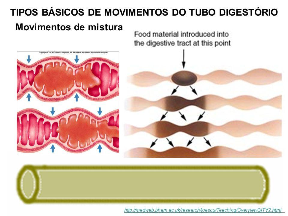 TIPOS BÁSICOS DE MOVIMENTOS DO TUBO DIGESTÓRIO