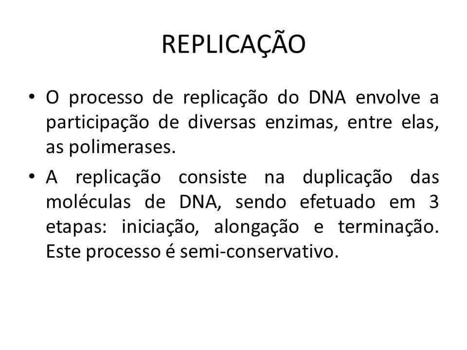 REPLICAÇÃO O processo de replicação do DNA envolve a participação de diversas enzimas, entre elas, as polimerases.