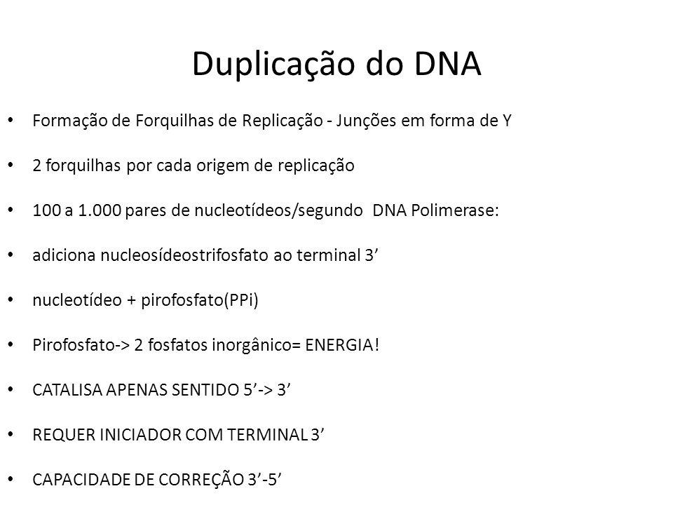 Duplicação do DNA Formação de Forquilhas de Replicação - Junções em forma de Y. 2 forquilhas por cada origem de replicação.