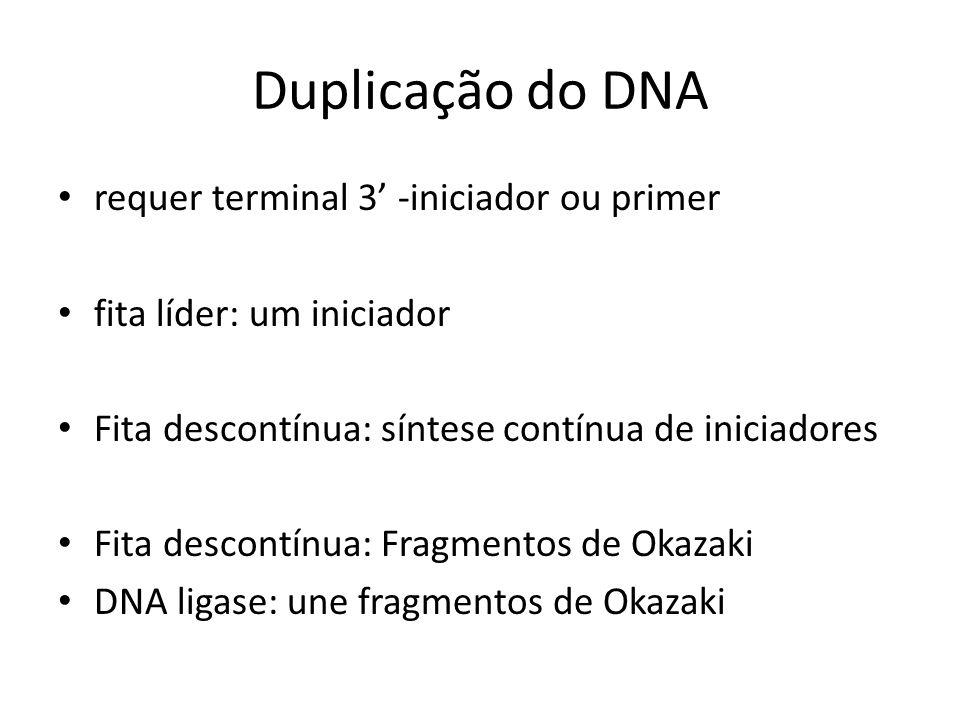 Duplicação do DNA requer terminal 3' -iniciador ou primer