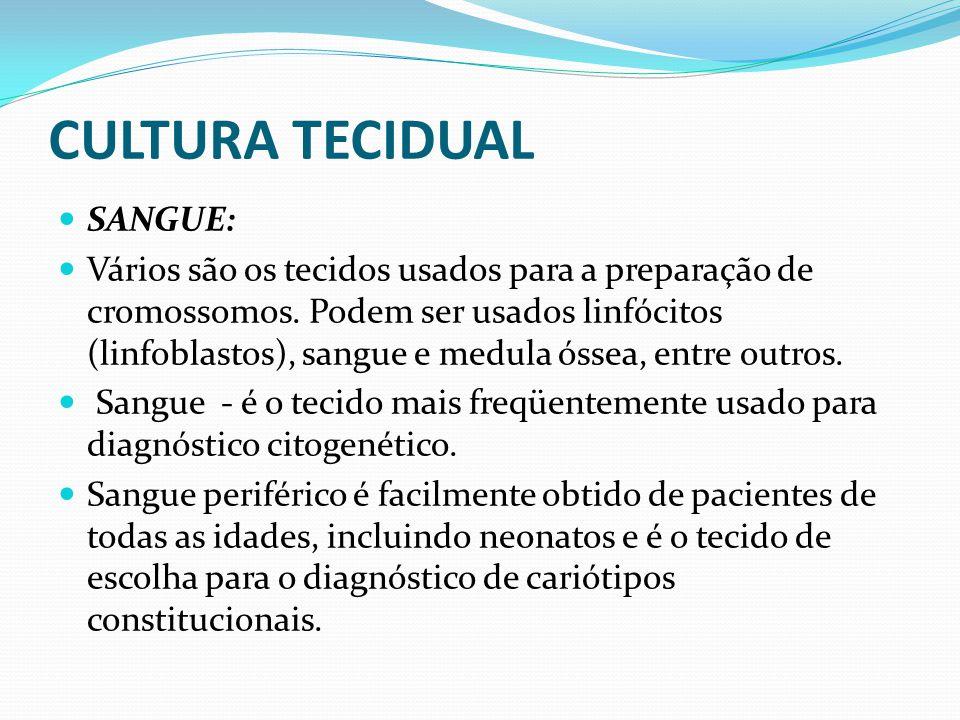 CULTURA TECIDUAL SANGUE: