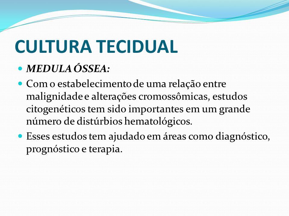 CULTURA TECIDUAL MEDULA ÓSSEA: