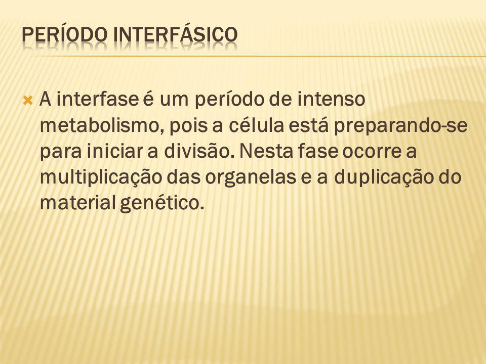 PERÍODO INTERFÁSICO