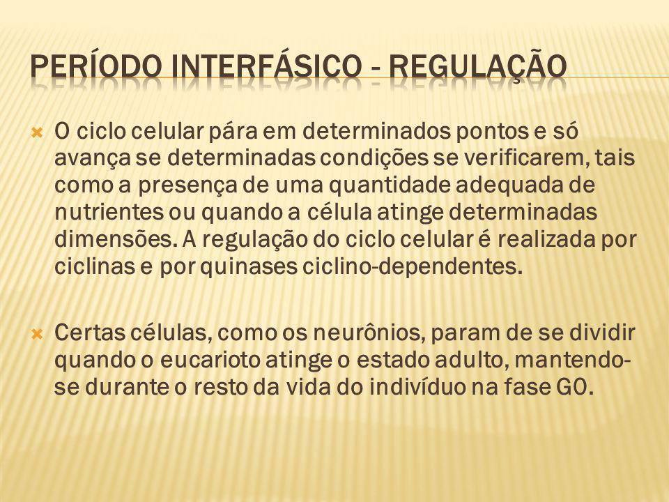 PERÍODO INTERFÁSICO - REGULAÇÃO