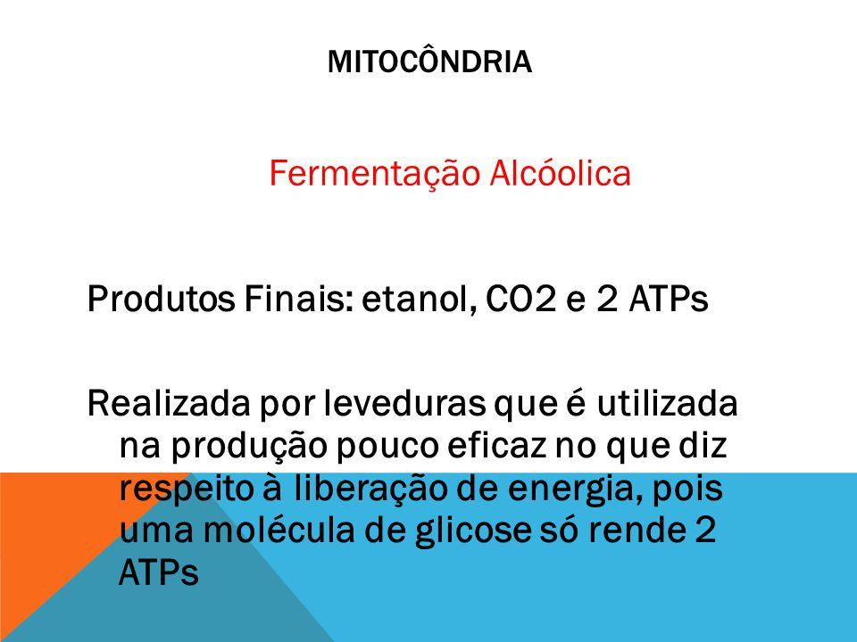 MITOCÔNDRIA Fermentação Alcóolica.