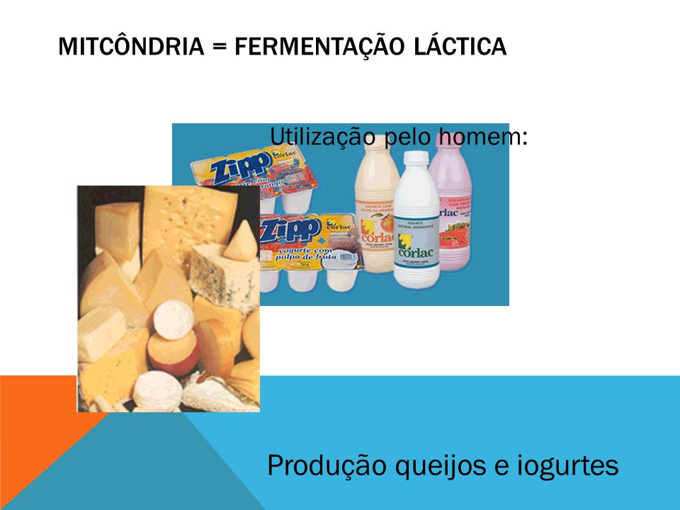 MITCÔNDRIA = FERMENTAÇÃO LÁCTICA