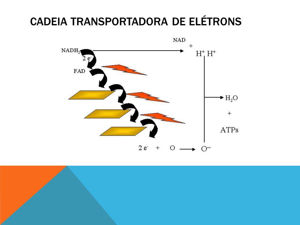 Cadeia Transportadora de Elétrons