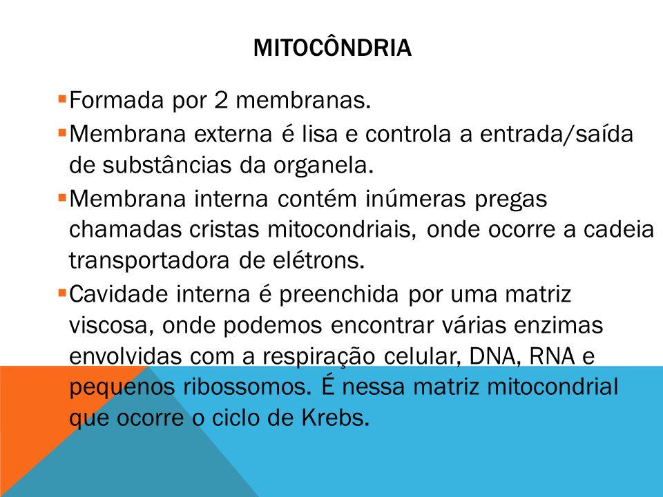 mitocôndria Formada por 2 membranas. Membrana externa é lisa e controla a entrada/saída de substâncias da organela.
