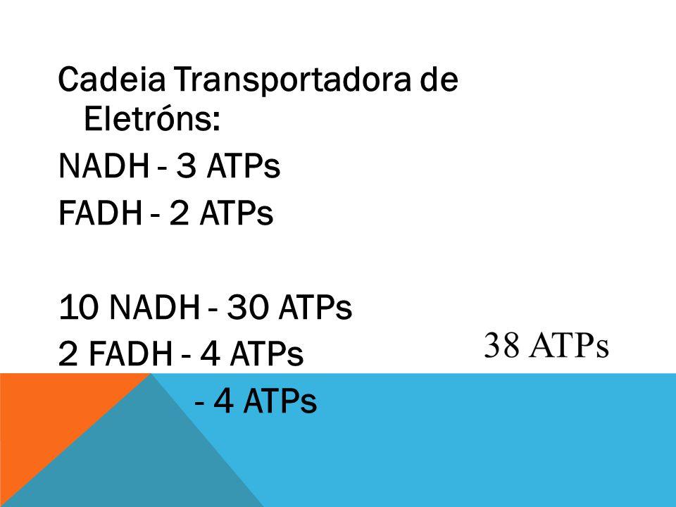 Cadeia Transportadora de Eletróns: NADH - 3 ATPs FADH - 2 ATPs 10 NADH - 30 ATPs 2 FADH - 4 ATPs - 4 ATPs