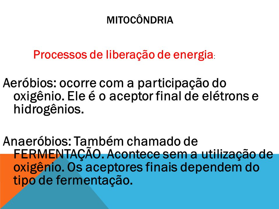 mitocôndria Processos de liberação de energia: