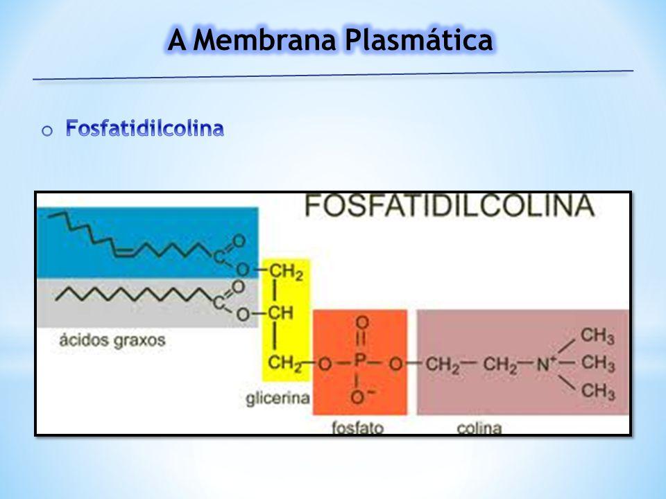 A Membrana Plasmática Fosfatidilcolina