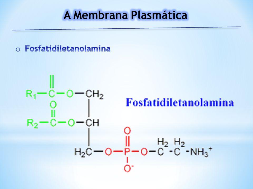 A Membrana Plasmática Fosfatidiletanolamina
