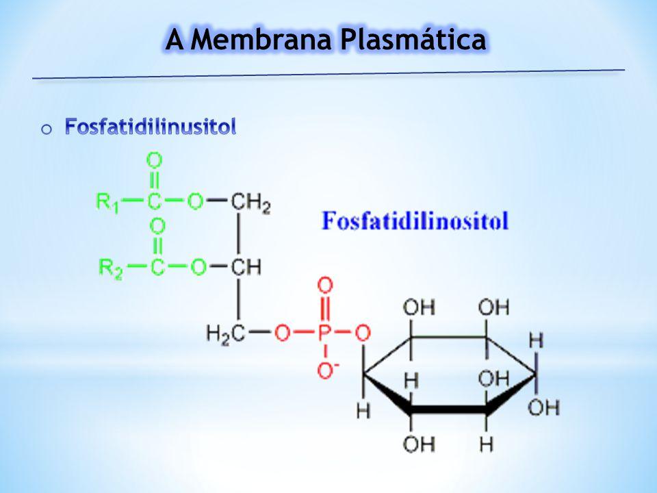A Membrana Plasmática Fosfatidilinusitol
